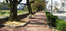 The Road of SAISEI
